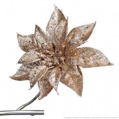 Fleur de Noël - Champagne