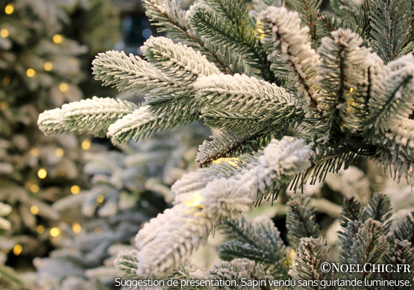 detail-branches-POLAIRE-02.jpg