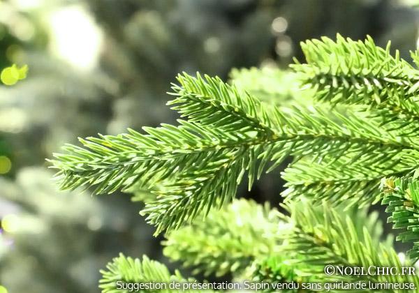 detail-branches-sapin-BALTHAZAR.jpg